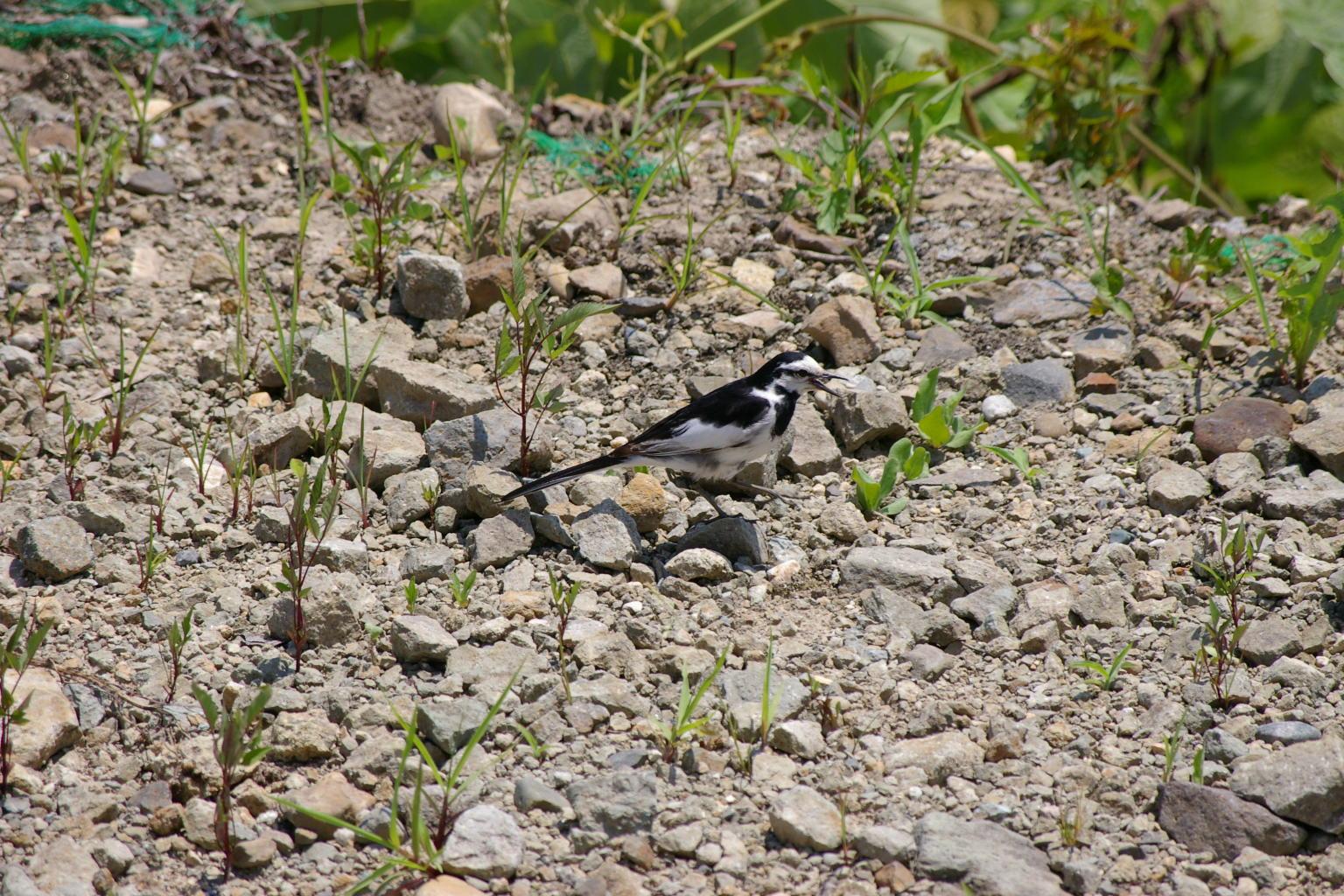テラスの前には、野鳥もいました。
