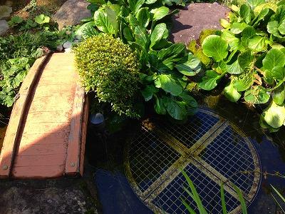 我が家の庭の池です