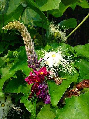 烏瓜の花と葛の花