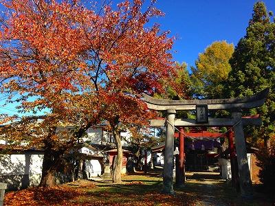 若木神社も紅葉の季節、落ち葉の季節