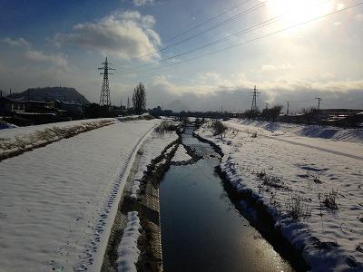 冬の野川です