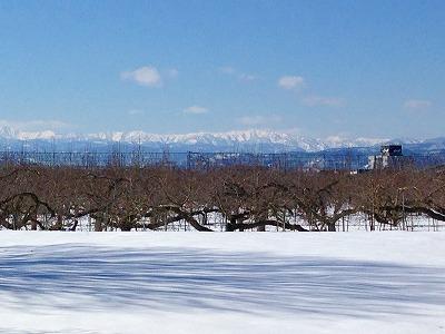 雪原の美しい風景