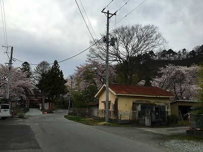 若木山も桜が満開