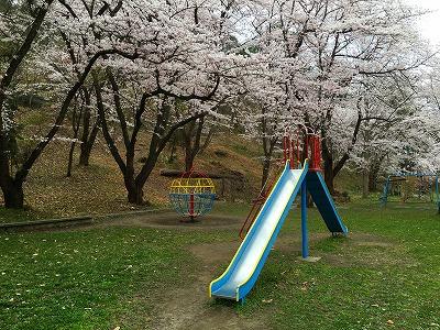 若木山公園の滑り台と桜の風景