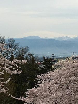 若木山からの桜と月山