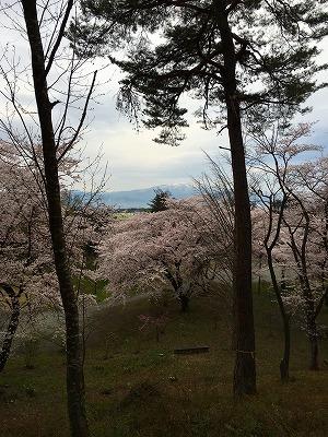 若木山からの桜からの月山の眺め