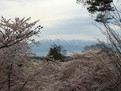 桜と葉山の眺め