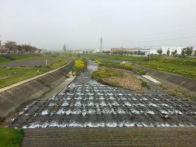 菜の花咲く野川のズーム