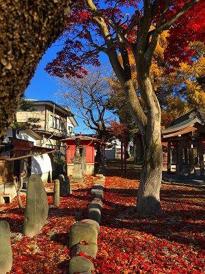 若木神社の落葉