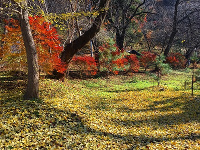 若木山公園の落葉