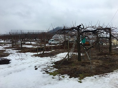 果樹園、雪景色