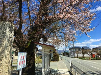 板垣神社の桜