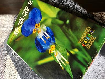 カラー 野に咲く花2